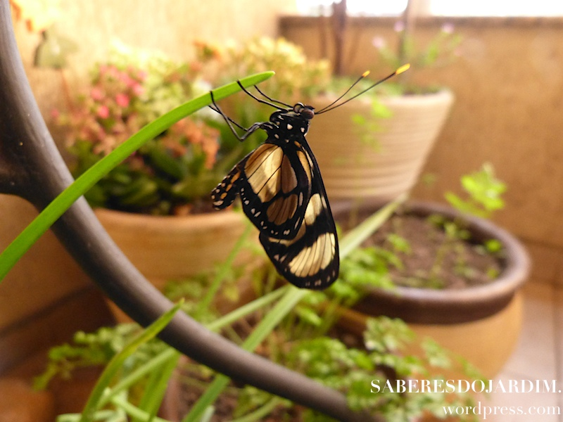 borboleta_09 (1)