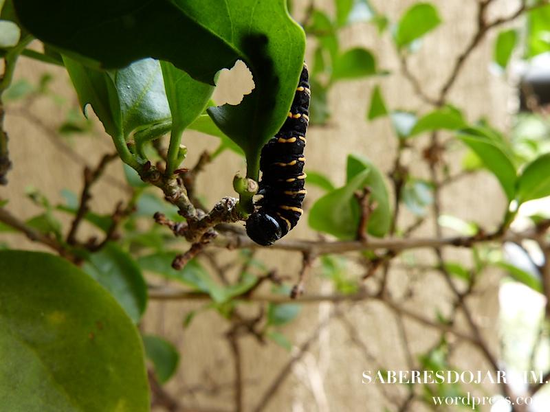 borboletas_04 (1)