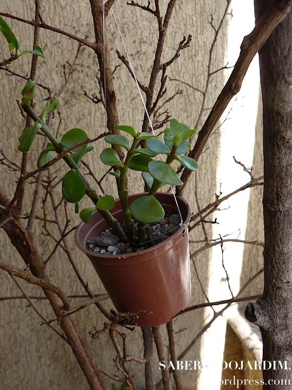 Árvore de Mini Vasinhos de Cactos e Suculentas