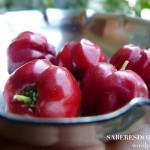 NATAL, Flores e Frutos