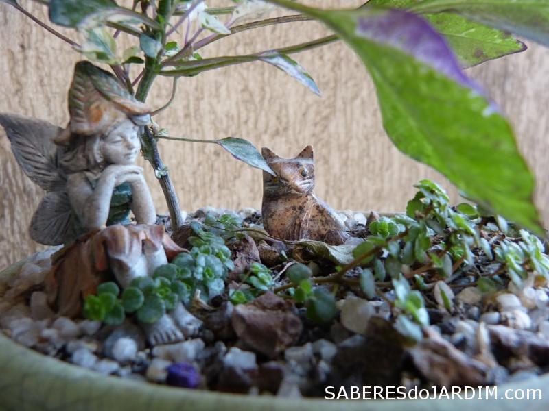 Fadas e Mini Jardins - Bonchi com barba de moisés