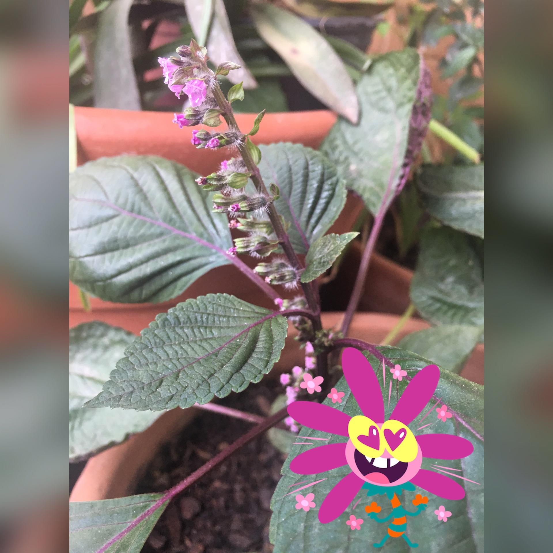 Plantas no Divã