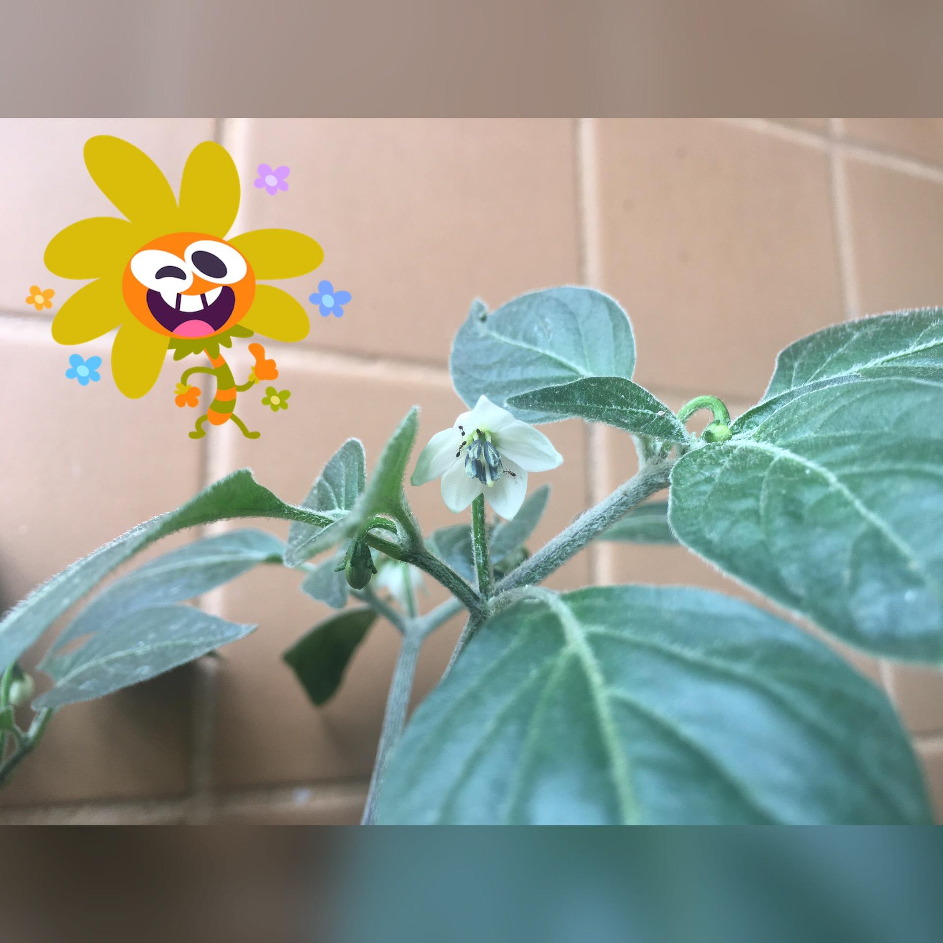 Saberes do Jardim - Plantas no Divã