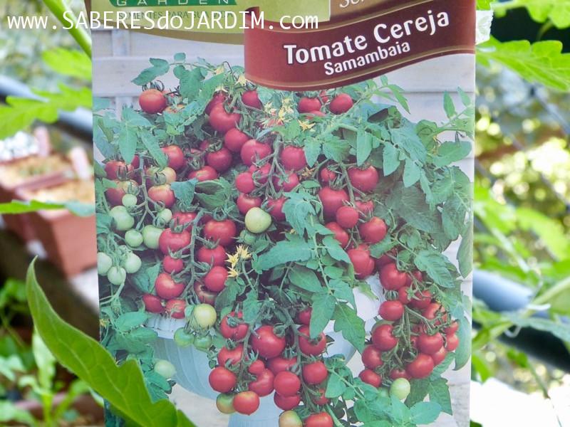 Tomate Cereja Samambaia